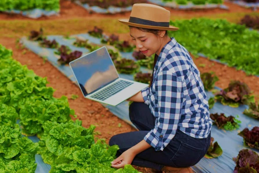 Loja de produtos naturais online