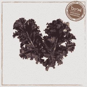 Couve kale roxa orgânica