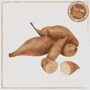 batata yacon orgânica