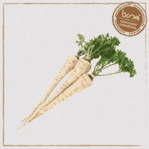 Cenoura branca orgânica